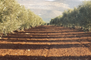 Invasion and occupation devastate agriculture and industry in Afrin